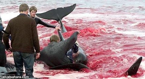 dolphin9